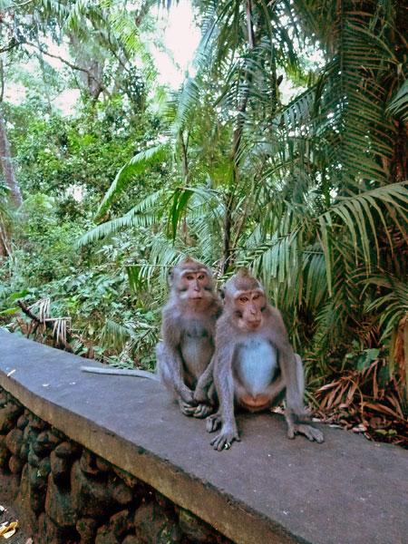 The Sacred Monkey Forest Sanctuary in Ubud, Bali.