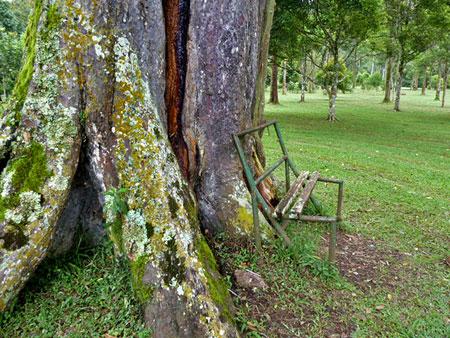 The raddest bench ever. Bali Botanical Gardens in Candikuning, Bali.