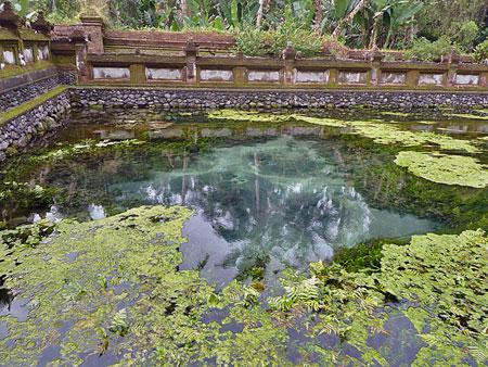 The roiling springs pool at Pura Tirta Empul, Bali.