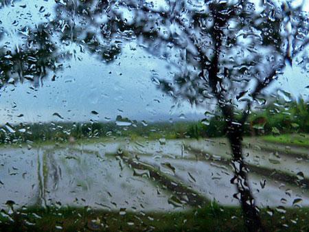 A rainy rice field in Western Bali.