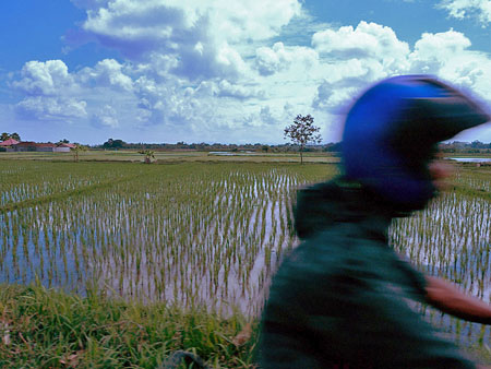A rice pool with motorcyclist somewhere in Bali.