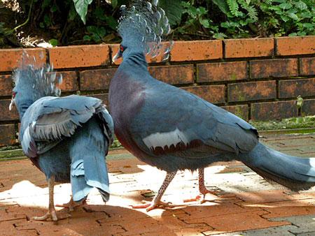 A couple of punker birds at the KL Bird Park in Kuala Lumpur, Malaysia.