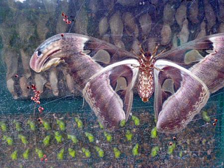 A big ol' butterfly in a tank at Taman Rama Rama in Kuala Lumpur, Malaysia.