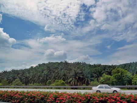 The endless Malaysian jungle toward Kuala Lumpur scrolls by my bus window.