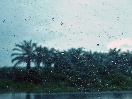 Just a few of a million rainy palms on the way to Melaka, Malaysia.