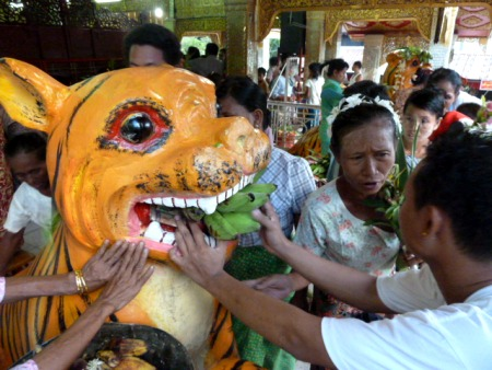 Feeding the tiger at the nat pwe in Taungbyone, Myanmar.