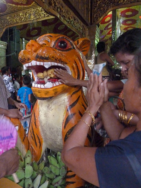 Appeasing the spirit of the tiger at the Nat Pwe in Taungbyone, Myanmar.