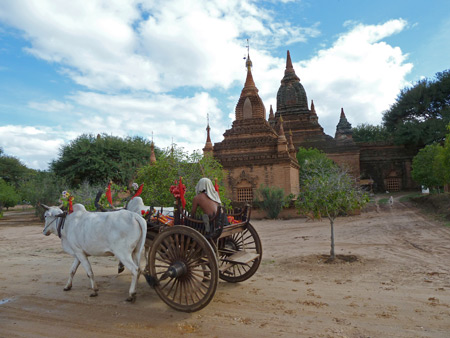 Beasts of burden pull a man in a cart past some temples in Bagan, Myanmar.