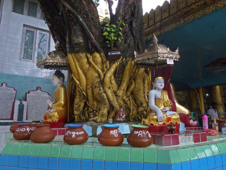 A Buddhist shrine in a tree at Sule Pagoda in Yangon, Myanmar.