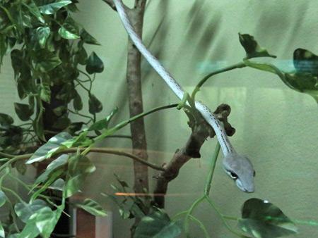 The indoor serpentarium at the Queen Saovabha Institute Snake Farm in Silom, Bangkok, Thailand.