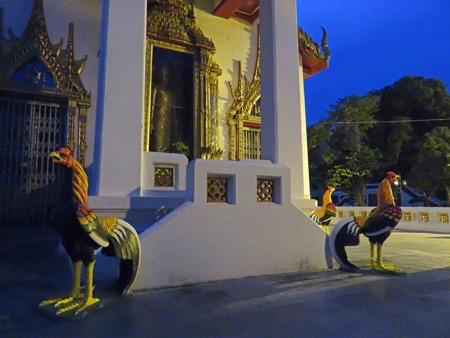 Roosters guard Wat Senatsanaram Ayutthaya in Ayutthaya, Thailand.