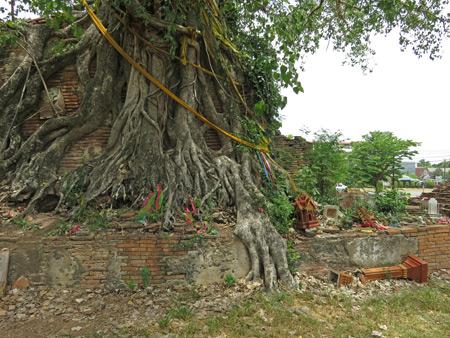 A tree smothers ruins at Wat Khun Muang Chai in Ayutthaya, Thailand.