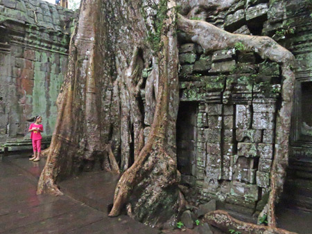 A wall of roots engulfs a wall of stone at Ta Prohm, Angkor in Siem Reap, Cambodia.
