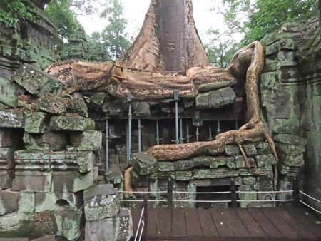 Tree roots and stone walls supported by joists at Ta Prohm, Angkor in Siem Reap, Cambodia.