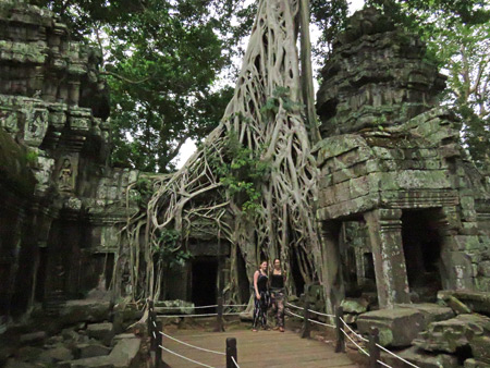 A picturesque scene at Ta Prohm, Angkor in Siem Reap, Cambodia.
