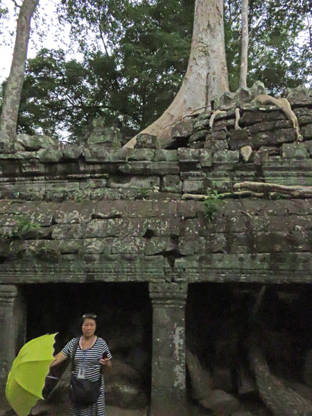 Another photogenic scene at Ta Prohm, Angkor in Siem Reap, Cambodia.