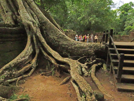 Some gnarly tree roots at Ta Prohm, Angkor in Siem Reap, Cambodia.