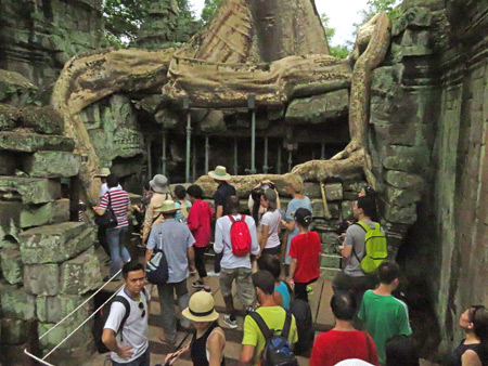 A tourist horde swarms a tree at Ta Prohm, Angkor in Siem Reap, Cambodia.