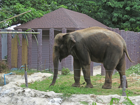 An elephant at the Dusit Zoo in Bangkok, Thailand.