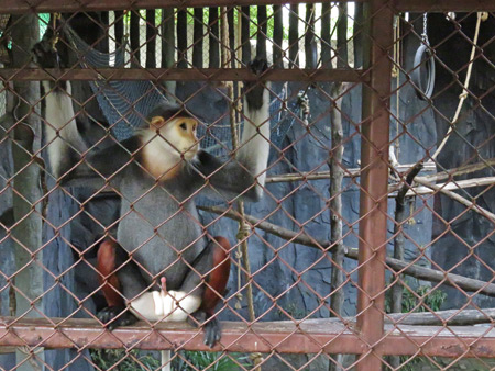 A monkey hangs loose at the Dusit Zoo in Bangkok, Thailand.