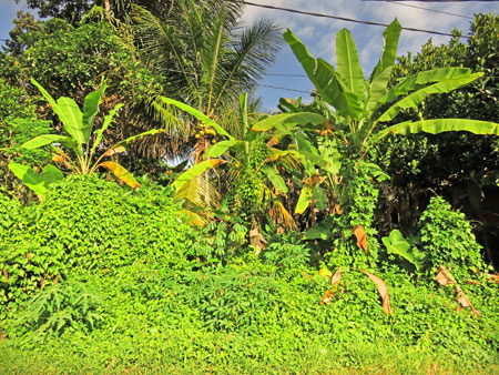 Ultra bright green palm trees on Jalon Suweta in Ubud, Bali, Indonesia.