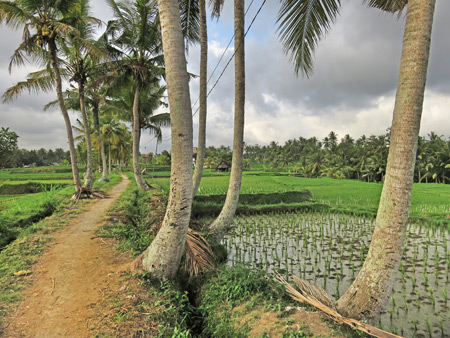 Heading past the Subak Juwuk Manis rice field in Ubud, Bali, Indonesia.