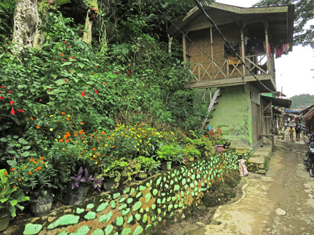 A verdant green scene in Bukit Lawang, Sumatra, Indonesia.