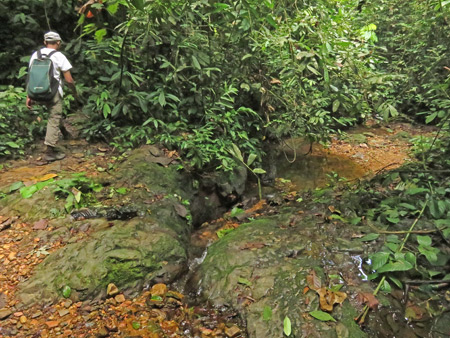 A creek bed in Bukit Lawang, Sumatra, Indonesia.