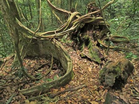 A gnarly jungle scene in Bukit Lawang, Sumatra, Indonesia.