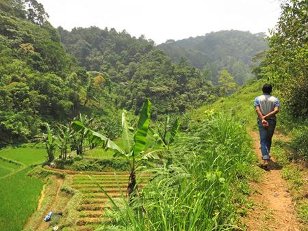 Hiking through a valley toward the Rafflesia flower north of Bukittinggi, Sumatra, Indonesia.