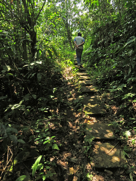 Hiking through a jungle toward the Rafflesia flower north of Bukittinggi, Sumatra, Indonesia.