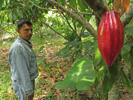 My guide, Armando, and a cacao fruit in Baso village near Bukittinggi, Sumatra, Indonesia.