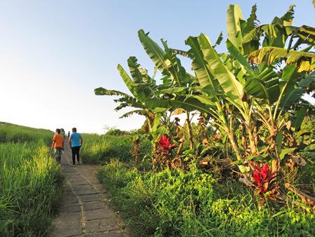 Walking past the palms on Campuhon Ridge in Ubud, Bali, Indonesia.