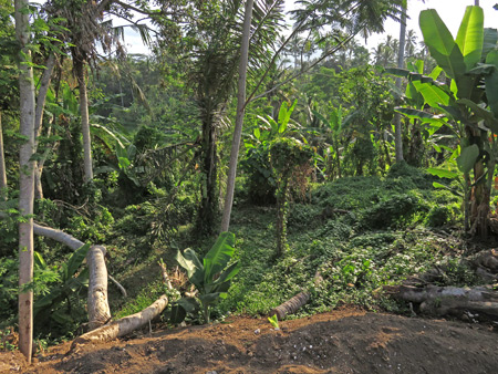 A jungle near Jalon Bisma in Ubud, Bali, Indonesia.