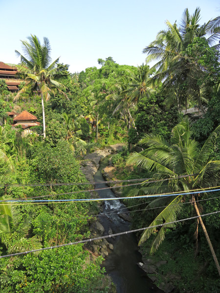 A jungle river gorge on Jalan Raya Singakerta in Nyuh Kuning, Ubud, Bali, Indonesia.