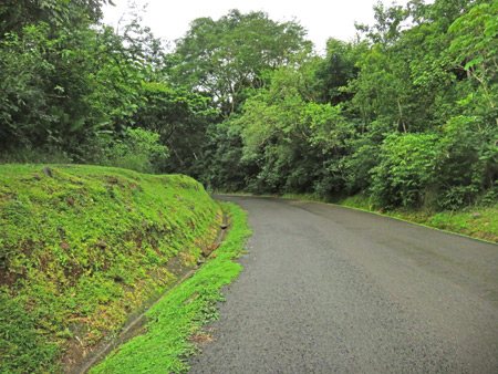 The bright green-fringed road leading away from Los Cangilones de Gualaca, Panama.