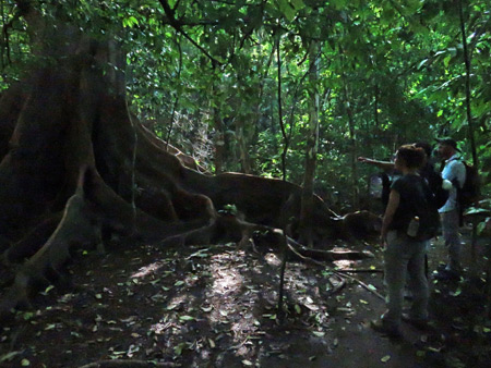 Trekkers scope a primeval-looking tree on the Osa Peninsula, Costa Rica.