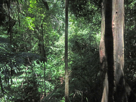 A thick jungle at Manuel Antonio National Park, Costa Rica.
