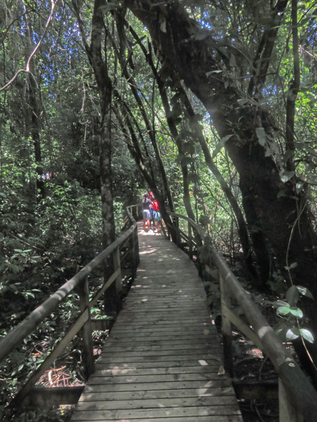 A wooden walkway / trail at Manuel Antonio National Park, Costa Rica.