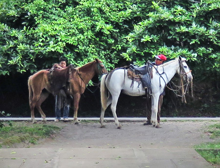 The ponies arrive out in front of Hospedaje Soma in Moyogalpa, Isla de Ometepe, Nicaragua.