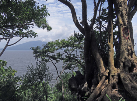 A gnarled tree at land's end on the peninsula in Charco Verde, Isla de Ometepe, Nicaragua.
