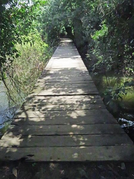 A wooden walkway in Charco Verde, Isla de Ometepe, Nicaragua.