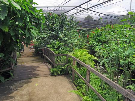 Butterfly Paradise in Charco Verde, Isla de Ometepe, Nicaragua.