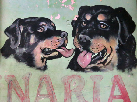 Doggies on the wall in Leon, Nicaragua.