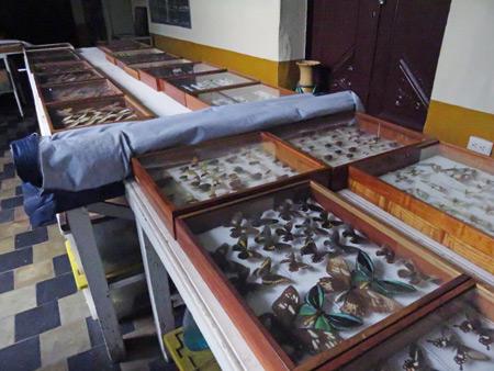 Display cases at El Museo Entomológico de Leon, Nicaragua.