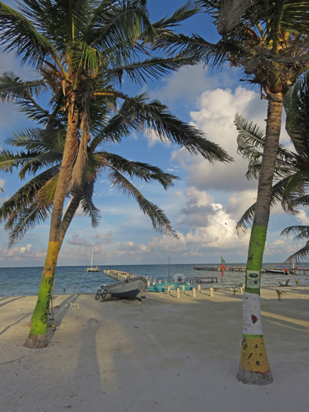Palm trees sway at sunset in Caye Caulker, Belize.