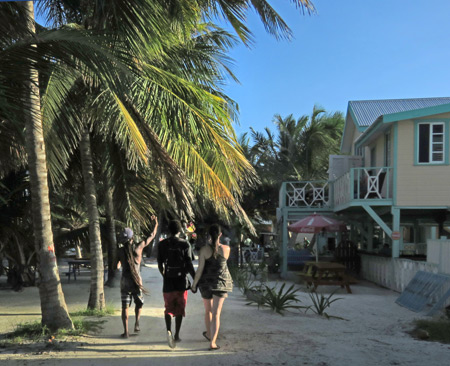 A trio roams free in Caye Caulker, Belize.
