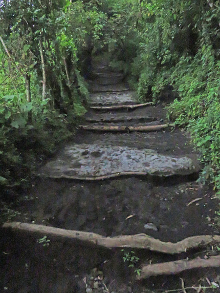 Some log steps on a trail leading up to Pacaya volcano in Guatemala.