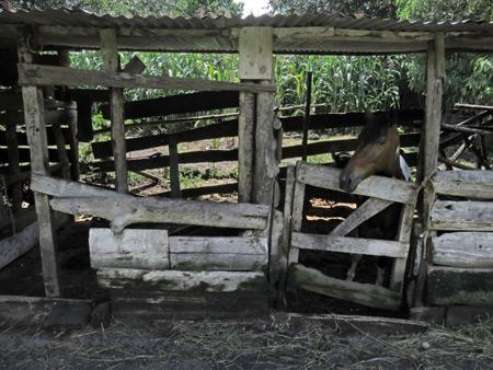 Moises' stables in San Pedro, Lago de Atitlan, Guatemala.