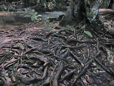Roots music at Semuc Champey, Guatemala.
